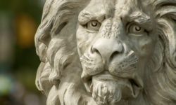 How One Lion Destroyed Someone's Reputation